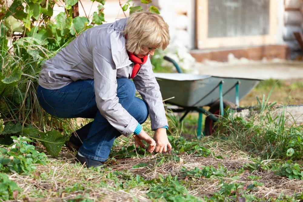 A woman clears away dead vegetation to prevent pests and plant disease from lingering in her garden during the winter.
