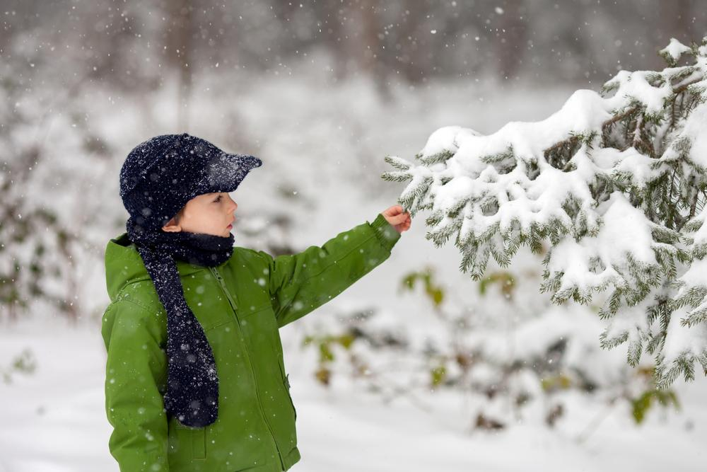 Little boy touches a tree in the winter.