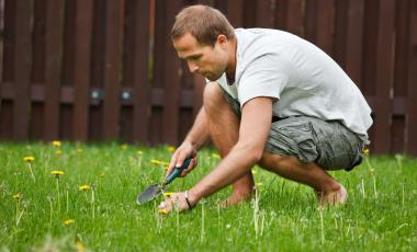 Man pulling weeds from lawn